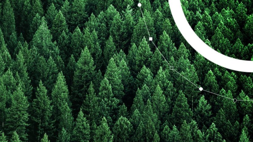 Aerial view of green pine forest with Refinitiv sustainability logo